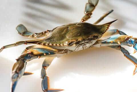 family-fat-crab